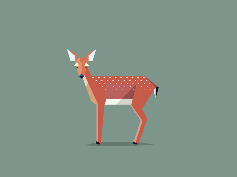 red-deer-fawn